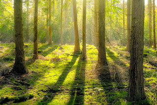 Hypnotherapy / NLP / EMDR: See the wood for the trees